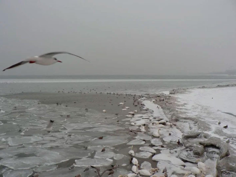 baltique-hiver-gelee-pologne